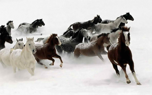 Winter Scaping Horses Wallpaper