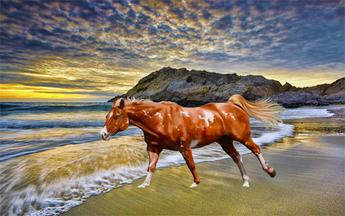 Horse At Beach Wallpaper