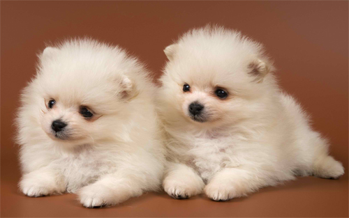 Adorable Dogs Wallpaper