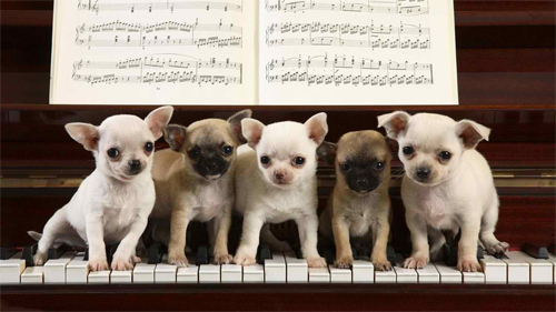 We are pianists Wallpaper