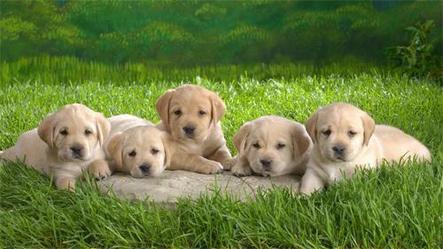 Dog Family Wallpaper