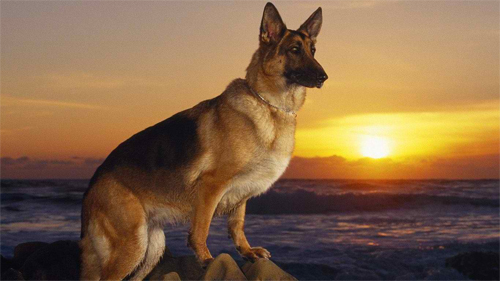 heaven dog Wallpaper