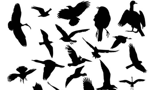 Bird silhouette brushes