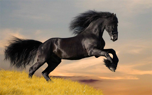 amazing black horse Wallpaper