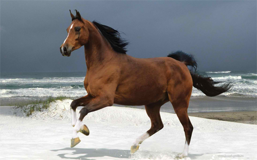 Majestic brown horse Wallpaper