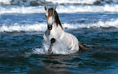 Horse in Water HD Wallpaper
