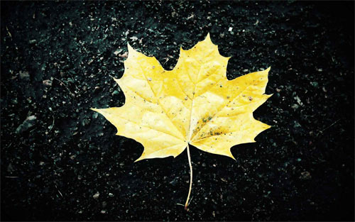 Abstract Maple Leaf_85438 Wallpaper