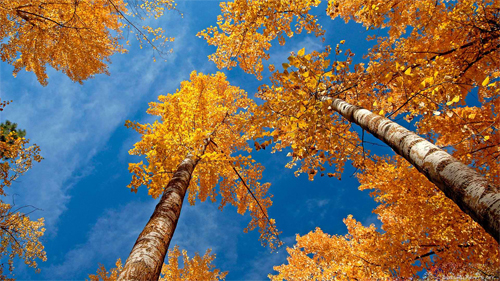 Beautiful Autumn_90253 Wallpaper
