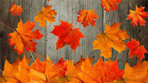 Rustic Autumn_88389 Wallpaper