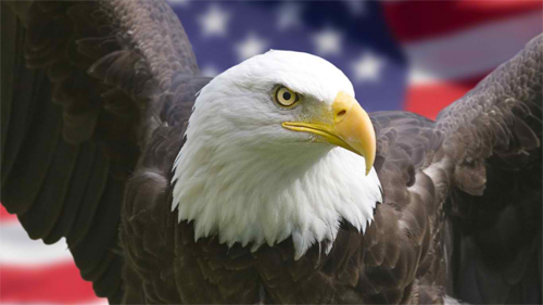 American Eagle wallpaper