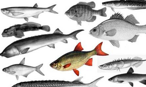 116 different fish Brushes