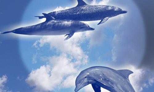 Photoshop dolphins brushes