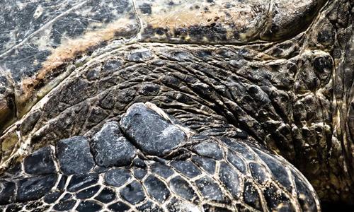 Turtle hands