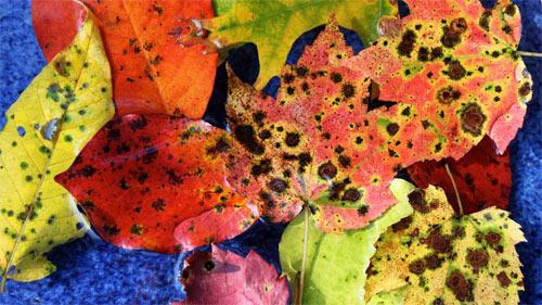 Leaf Assortment wallpaper