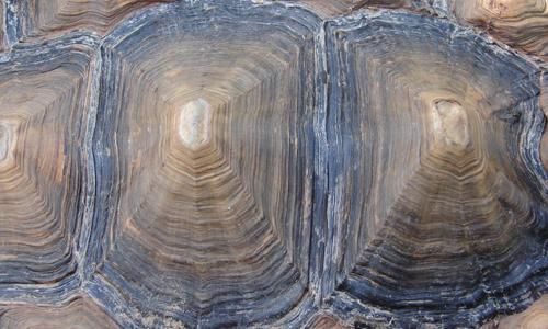 Bumpy Tortoise Shell Texture