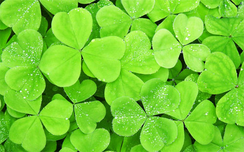 Lots of clover leaf wallpapers