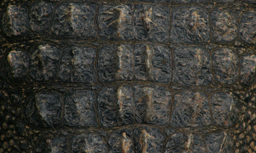 Alligator Neck Texture