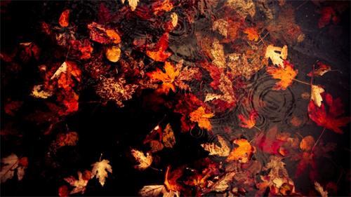 Floating Leaves wallpapers