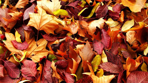 autumn-carpet wallpaper