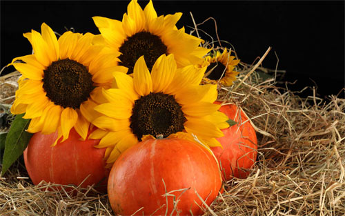 Sunflowers and fruits wallpaper
