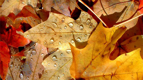 Autumn Collage wallpaper
