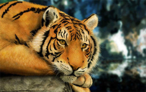 CROUCHING TIGER_49277 Wallpaper