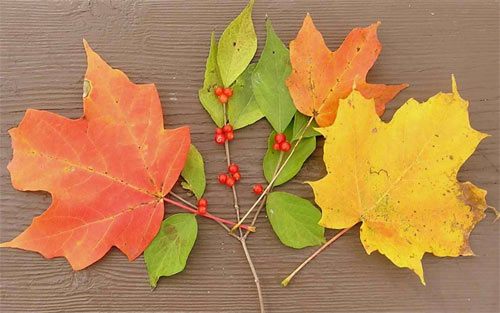 Autumn Leaf Arrangement wallpaper