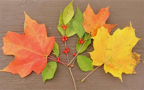 Autumn Leaf Arrangement wallpaper