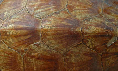Turtleshell Texture_002