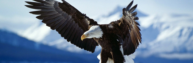 30 Magnificent Free Eagle Wallpaper Collections