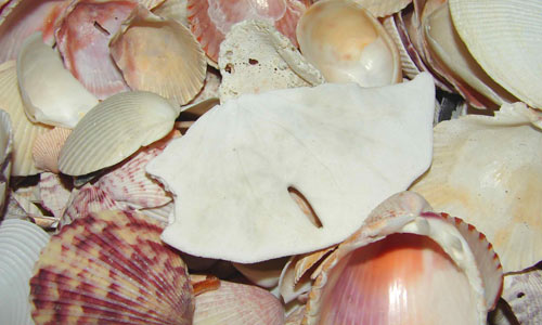 Seashells Stock Texture