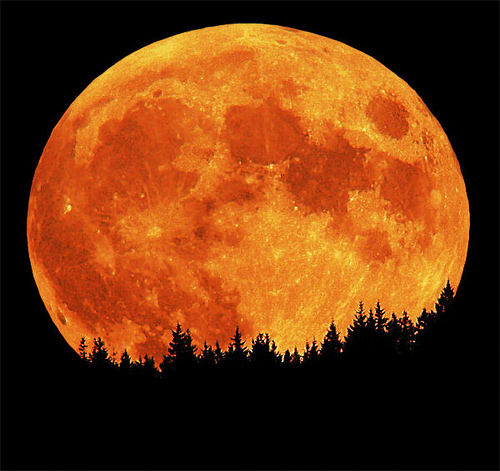 Red perigree big full cool moon wallpaper