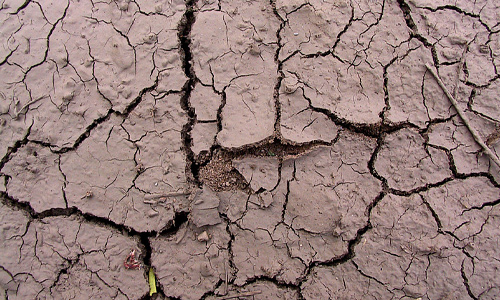 Cracked brown mud texture