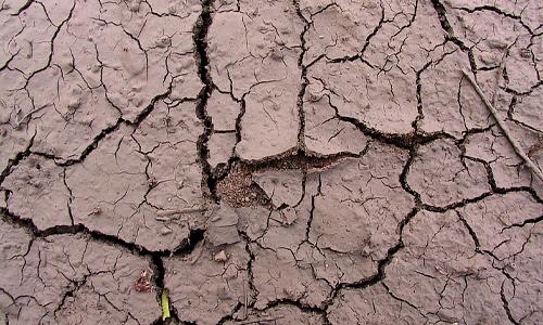 Cracked brown mud texture