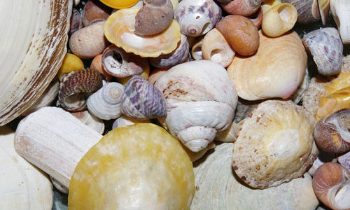 Shell 1 textures