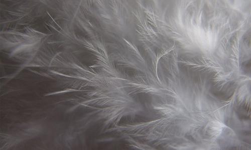 Grey feather beautiful texture