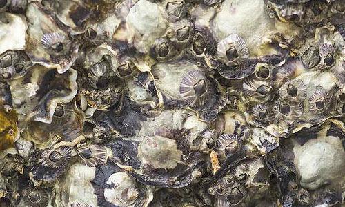 Shell texture 1