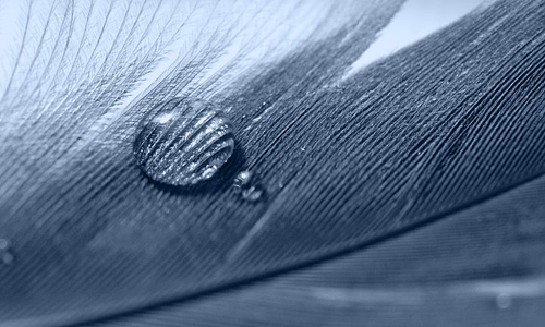 Blue droplet feather beautiful texture
