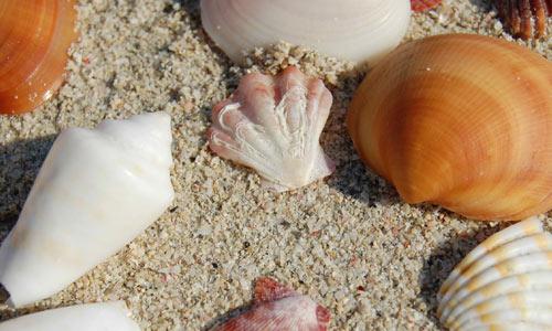 Sea shells 3 texture