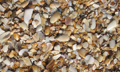 Crushed shells texture