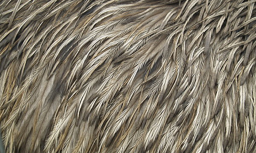 Cool abstract feather beautiful texture