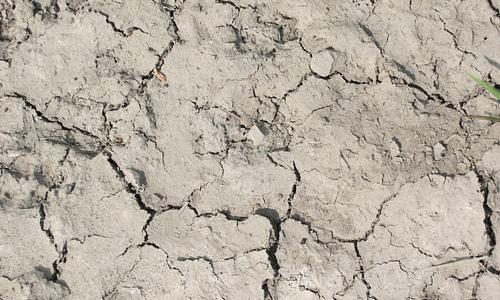 Cracked grass mud texture
