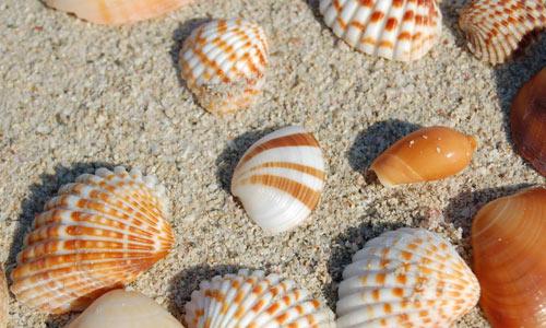 Sea shells 1 texture