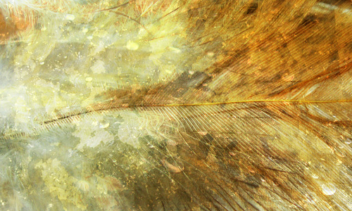 Grunge feather beautiful texture