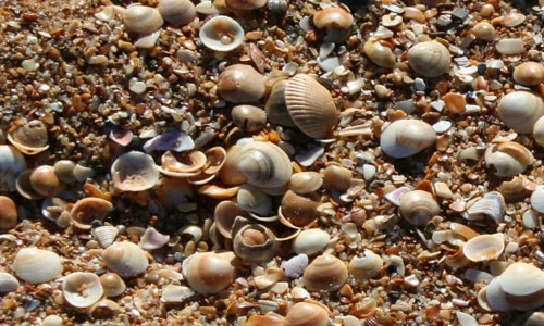 Sand and Shells texture