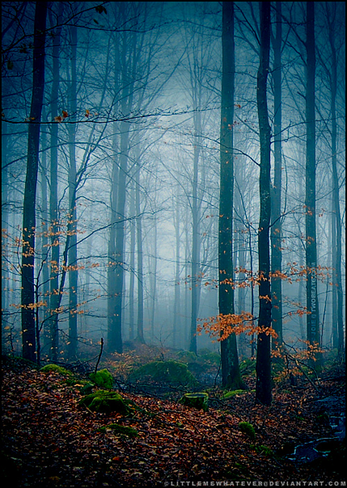 Blue foggy ambiance tree forest scary