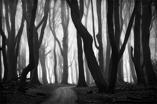 Black white tree forest scary