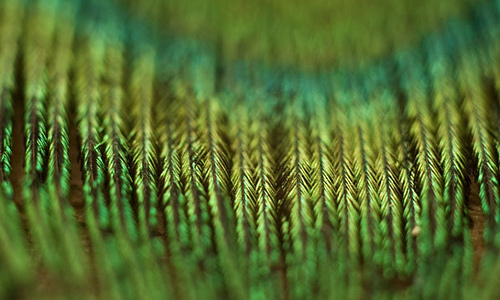 Green feather beautiful texture