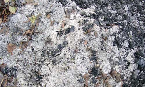 Ash1 texture