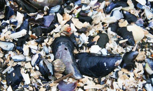 mussel texture 2
